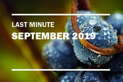 Last Minute Bordeaux